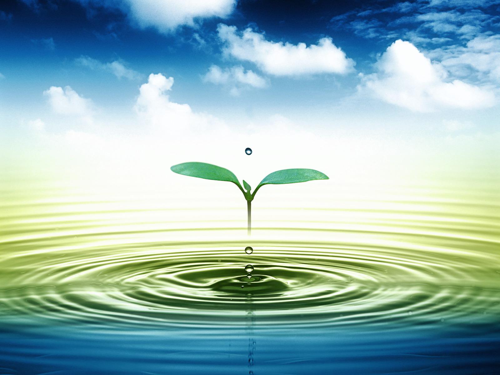 242/Nước và nước