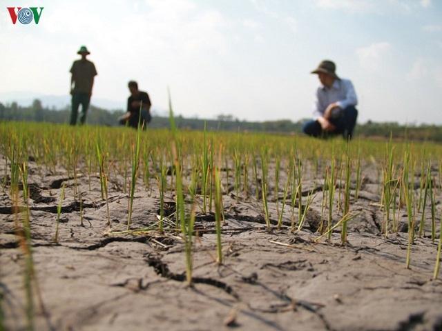 1922/Tây Nguyên khô hạn, gian nan tìm nước cho 2 triệu ha cây trồng