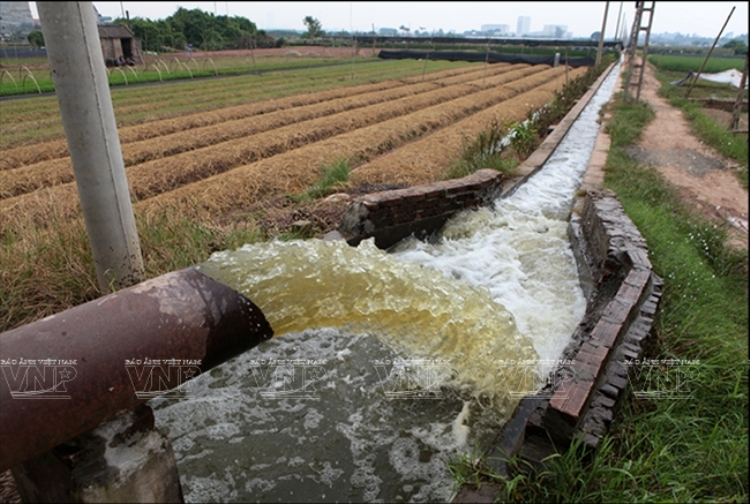 1210/Công nghệ mới xử lý nước tưới nông nghiệp bị nhiễm phèn