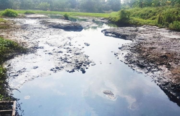 1080/Sông cầu Bây - Hà Nội ô nhiễm nghiêm trọng