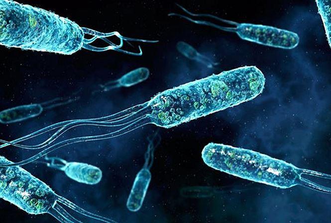 1346/Phát hiện vi khuẩn có thể làm sạch nước thải